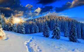 Picture winter, the sky, snow, landscape, nature, white, forest, road, sky, nature, sunset, beautiful, winter, snow, ...