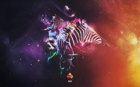 Picture collage, skull, Leo, Zebra, Africa, africa