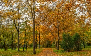 Picture Autumn, Trees, Park, Fall, Foliage, Park, Autumn, Trees, Falling leaves, Leaves, Path