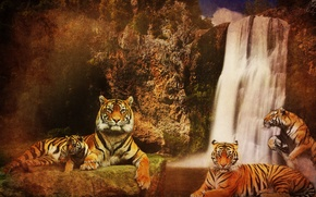 Picture water, cats, mountains, background, rocks, waterfall, predators, Tigers