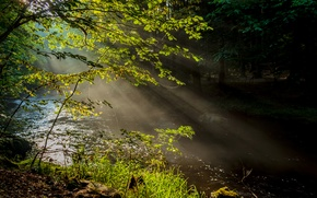 Picture forest, rays, trees, nature, fog, river
