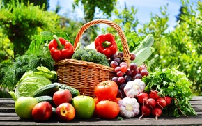 Picture nature, basket, apples, grapes, pepper, fruit, vegetables, tomatoes, cabbage, cucumbers, garlic, radishes