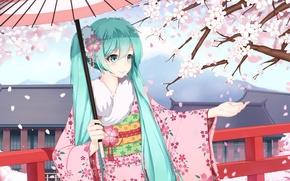 Picture girl, smile, umbrella, anime, petals, Sakura, art, kimono, vocaloid, hatsune miku, sugar sound