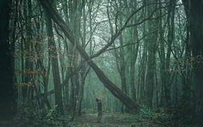 Picture forest, man, path