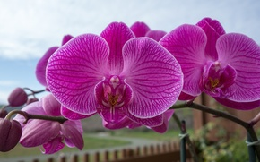 Picture macro, branch, Orchid, exotic