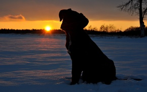Picture the sun, snow, sunset, puppy