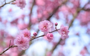Picture tree, spring, flowering, drain
