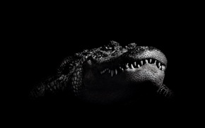 Picture black and white, crocodile