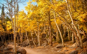 Wallpaper stones, path, the sky, slope, trees, autumn, forest