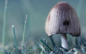 Wallpaper grass, green, 156, mushroom