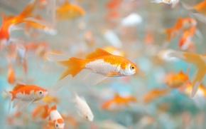 Picture fish, Aquarium, a lot