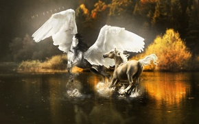 Wallpaper reflection, wings, art, trees, horse, squirt, Pegasus, water, fiction