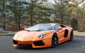 Picture trees, orange, reflection, lamborghini, orange, headlights, aventador, lp700-4, Lamborghini, aventador