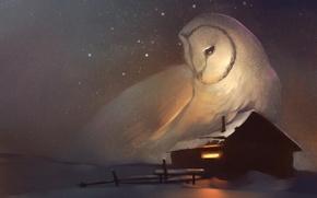 Picture winter, house, owl, stars, window, art