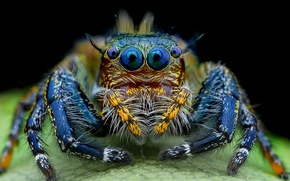 Picture eyes, spider, hairy, look, jumper