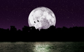 Picture stars, trees, birds, night, nature, river, loneliness, the moon, the darkness, the reflection in the ...