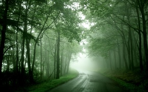 Picture road, forest, trees, fog