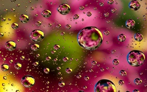 Picture abstraction, bubbles, background, colors, colorful, abstract, bubbles, background, floral
