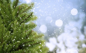 Wallpaper spruce, cold, winter, tree, trees, snowflakes, bokeh, ate, greens, branches
