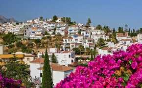 Picture the sky, flowers, nature, city, the city, palm trees, home, Spain, sky, nature, flowers, houses, …