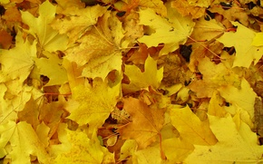 Picture autumn, macro, yellow, earth, Leaves, blanket
