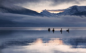Picture winter, snow, landscape, mountains, nature, lake, reflection, dawn, swans