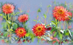 Picture flowers, drawing, dahlias