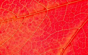 Picture autumn, nature, sheet, texture