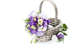 Picture flowers, petals, purple flowers