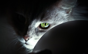 Picture light, cat, Cat, eye