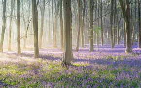 Wallpaper spring, forest, nature