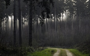 Picture forest, trees, trail, forest, Nature, grove, trees, path