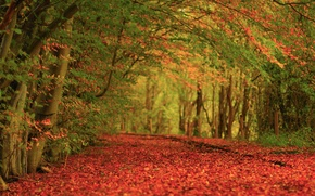 Wallpaper autumn, trees, nature, carpet, foliage
