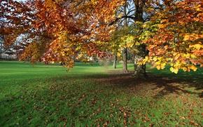 Picture Autumn, Park, Fall, Foliage, Park, Autumn, Leaves