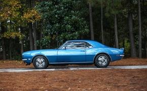 Picture Chevrolet, Camaro, Chevrolet, Camaro, 1968, Z/28