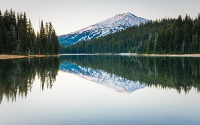 Picture forest, trees, nature, lake, reflection, mountain