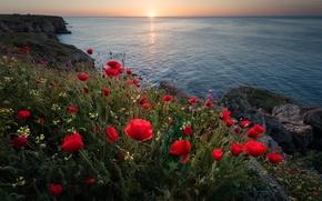Picture sea, flowers, sunrise, dawn, coast, Maki, morning, Bulgaria, The black sea, Bulgaria, Black Sea, Kamen …