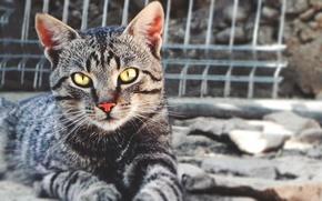 Picture cat, look, Cat, cat