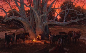 Picture tree, picture, the evening, horse, the fire, cowboy, halt, Duane Bryers, sycamore, Sycamore Canyon