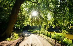 Picture the sun, rays, light, trees, lake, Park, shore, foliage, England, track, Birkenhead Wirral Merseyside