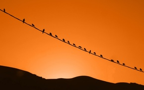 Picture the sky, sunset, birds, nature