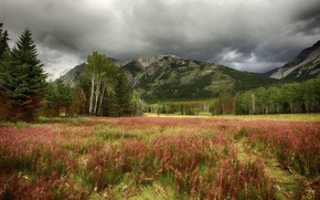 Picture autumn, the sky, grass, trees, mountains, clouds