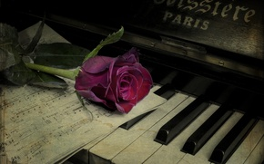 Picture flower, notes, rose, piano, vintage