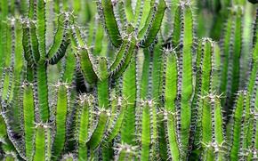 Picture landscape, nature, Cactus