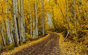 Picture road, autumn, leaves, autumn colors, fall, foliage, fall colors, golden road