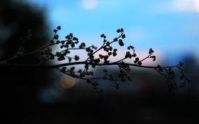Picture the sky, macro, sunset, blue, nature, plant, blur, branch, bokeh, bokeh