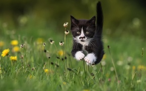 Picture summer, grass, cat, kitty, flight