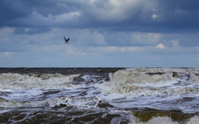 Picture sea, wave, foam, clouds, Seagull