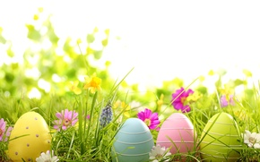 Wallpaper flowers, eggs, spring, camomile, flowers, Easter, eggs, painted, grass, daisy, grass, easter, spring
