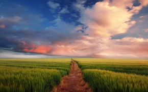 Picture road, field, the sky, clouds, horizon, ears